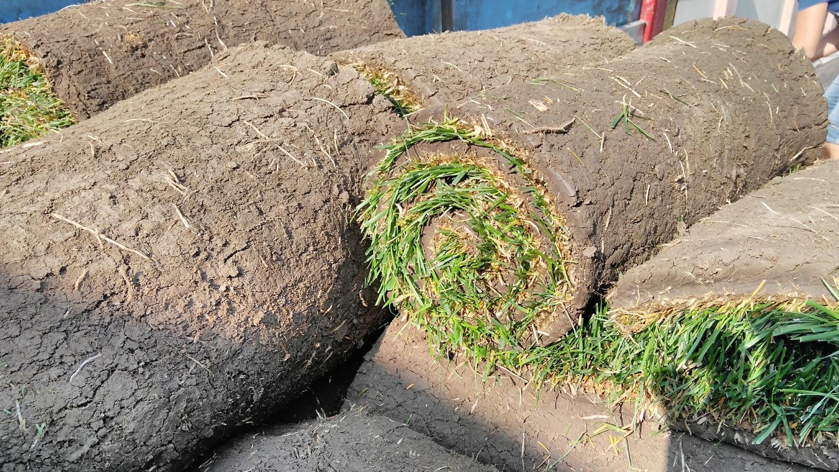 Рулонный газон СПОРТИВНЫЙ (Винница)